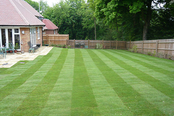 Lawn Construction and Renovation